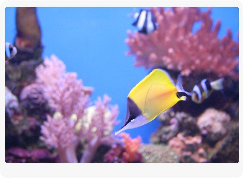 Palma Aquarium Can Pastilla - Portal Mallorca